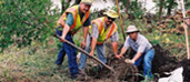 mndot workers planting a tree