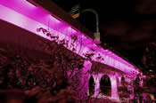 I-35W St. Anthony Bridge Event Lighting