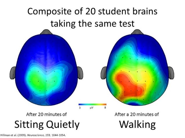 Heat map of two student brains; one showing little brain acitivity represents child after 20 mintues of sitting quietly; other showing much more brain activity represents child after 20 minutes of walking