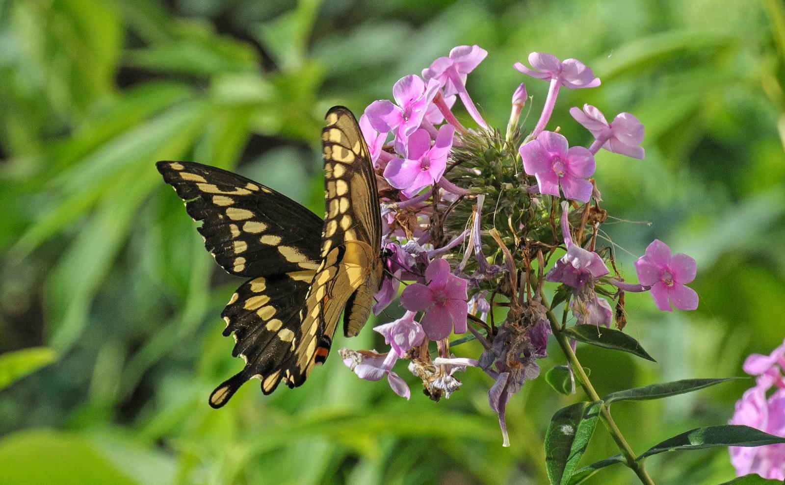 Pollinators MnDOT