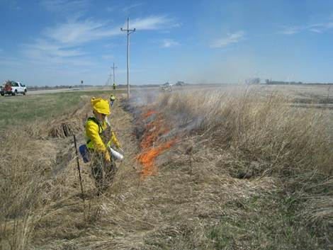 Starting the first burn this spring on Hwy  75 southwest of Crookston.  A drip torch is used to light close to the downwind  edge while crew members on foot, on an ATV, and in an engine stand by in case  the fire creeps into the adjacent bean stubble.