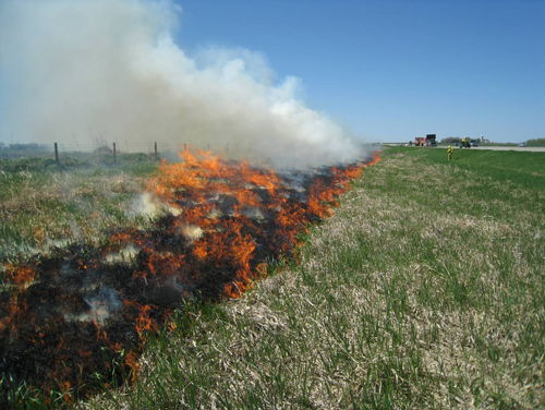 image of prescribed burn along mndot right-of-way