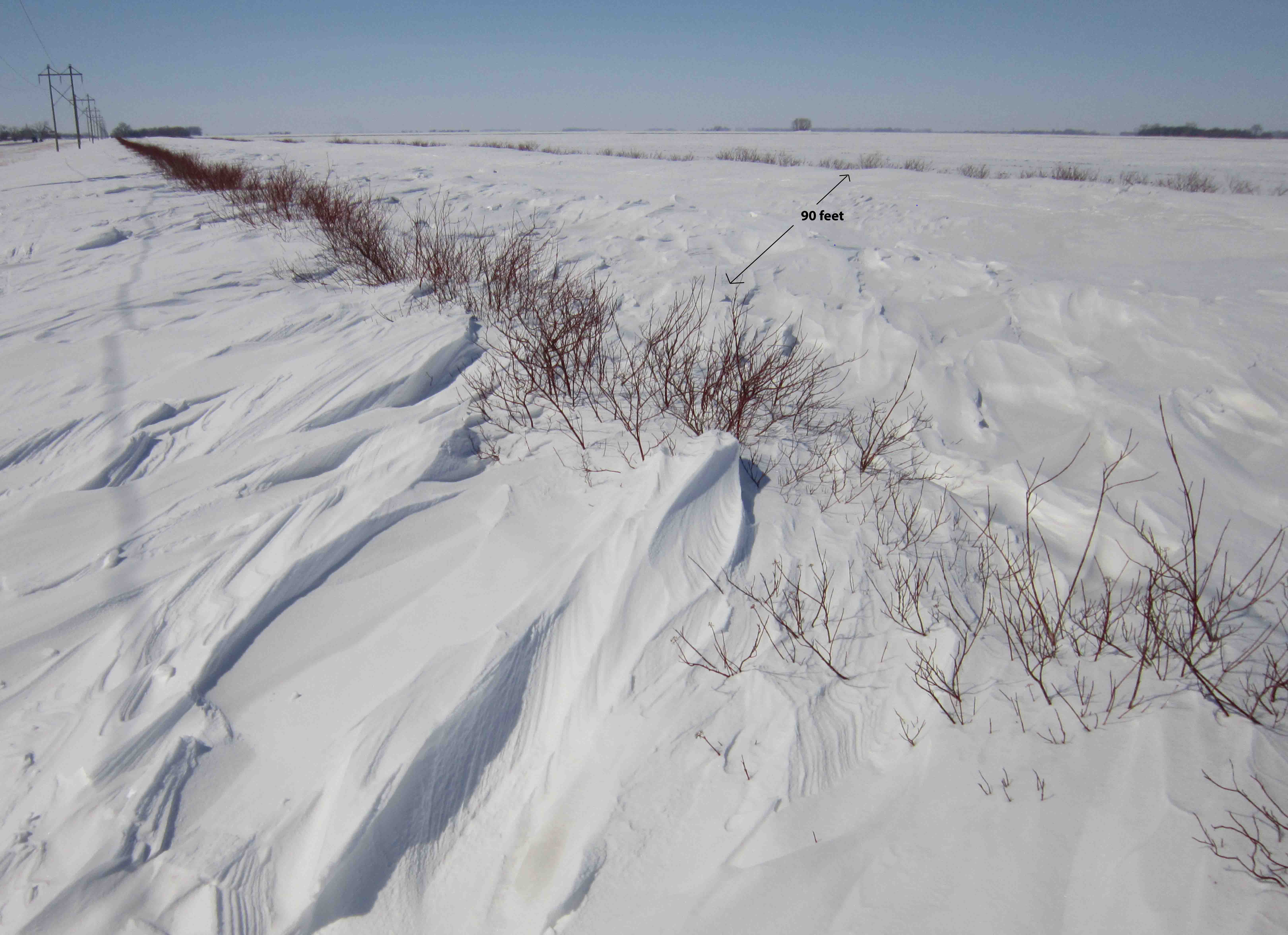 Living snow fence in field on Highway 210 with trees and shrubs.